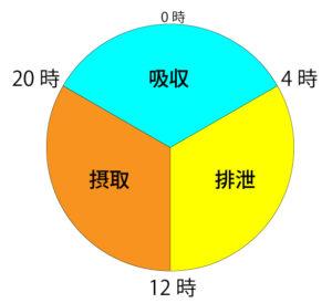 体のサイクル